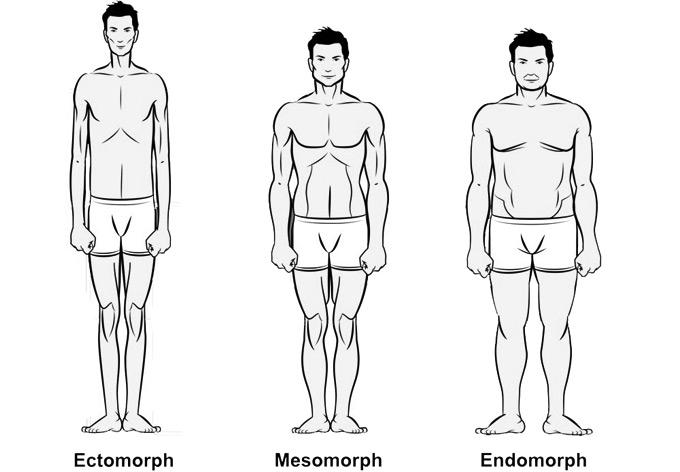 סוגי גוף
